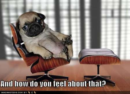 funny-dog-pictures-psychiatrist-pug