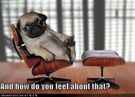 funny-dog-pictures-psychiatrist-pug